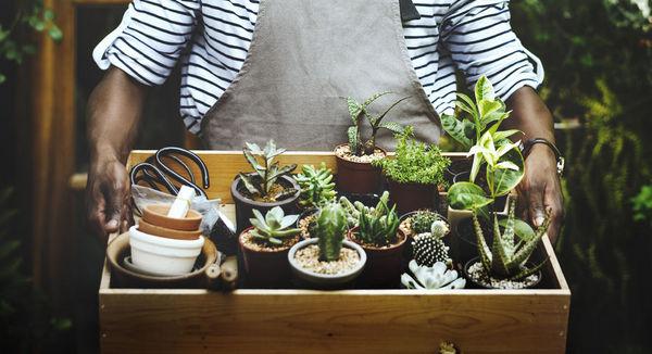 植物會思考嗎?