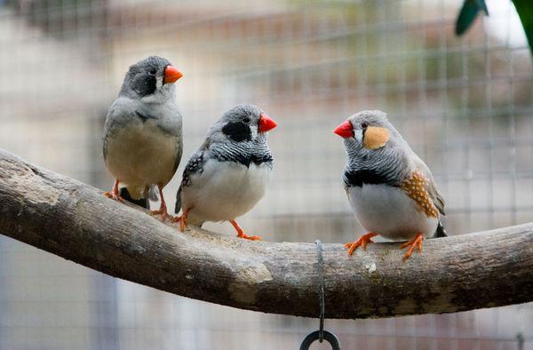 研究發現動物和人一樣採用輪番發言的交流方式