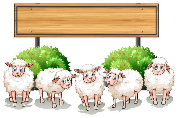 威爾士綿羊能認出熟悉的面孔