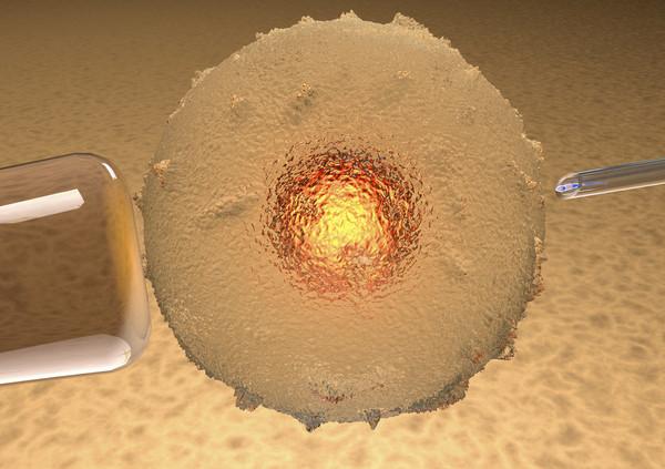 人類卵子首次在實驗室發育成熟