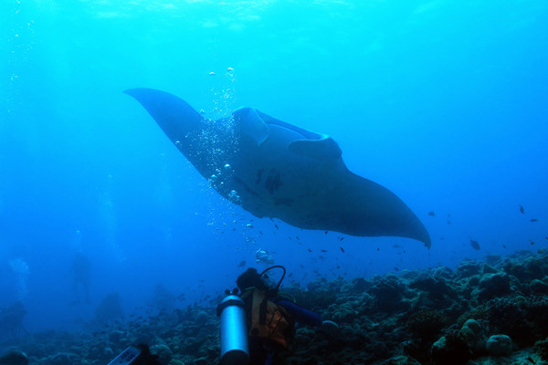 深海生物會在熱液噴口產卵以加快孵化速度