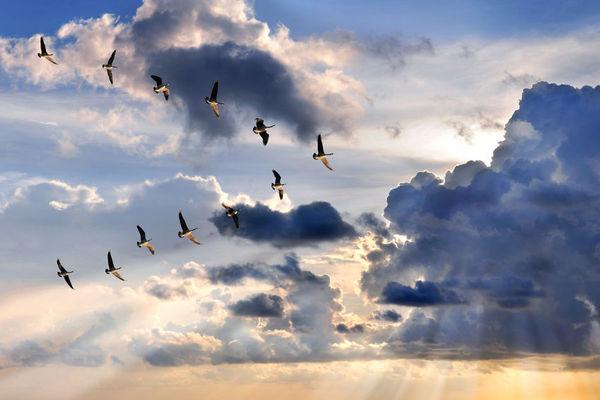 鳥類究竟是如何導航的