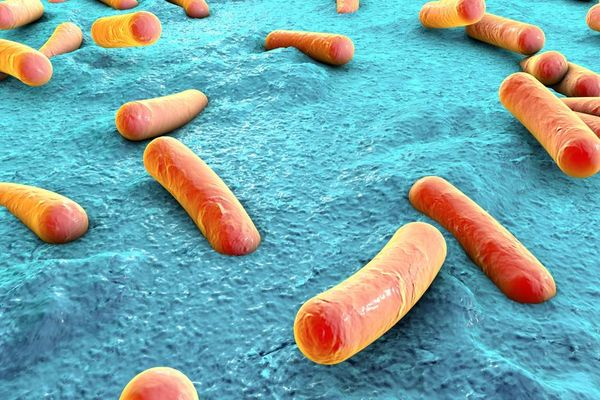 人體內有多少非人類細胞