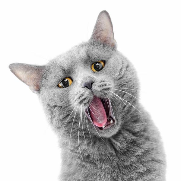 獸醫介紹如何科學地抱貓
