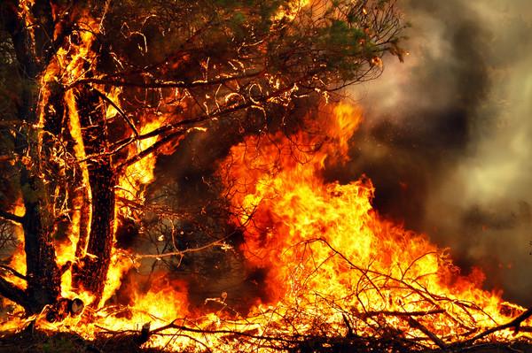 西伯利亞水深火熱之火熱篇