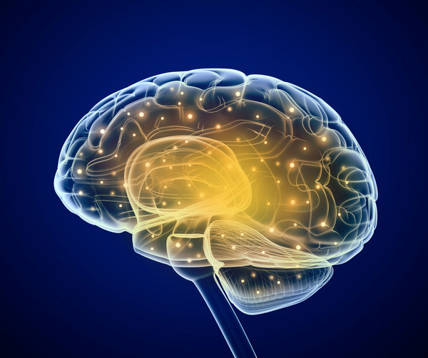 环境因素在基因层面上影响我们的智力表现