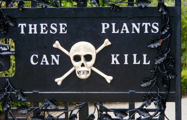 珍爱生命:世界各地致命植物小科普
