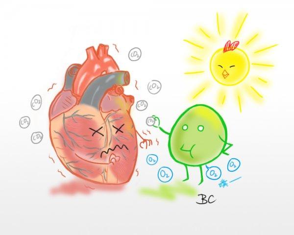 酷研究:利用光合作用幫助受損的心臟