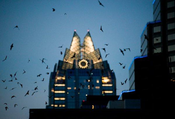 奥斯丁:十个理由让你喜欢上蝙蝠