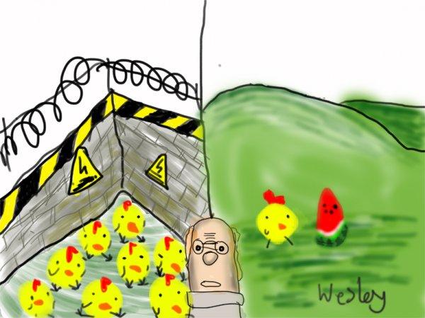 从散养蛋看道德消费