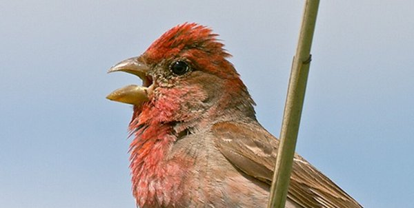 鸟鸣与人类音乐蕴含相同数学原理