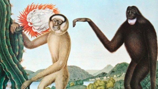 数百年前欧洲人想象的异国动物