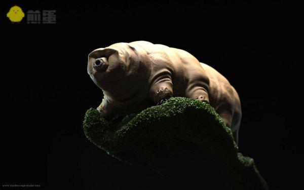 无敌是多么寂寞:水熊虫超强生命力之谜