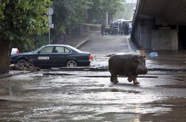 格鲁吉亚:从动物园出走的动物们