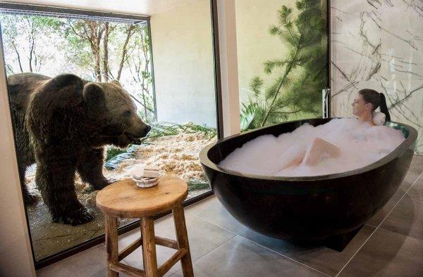 能近距离看到野生动物的酒店套房